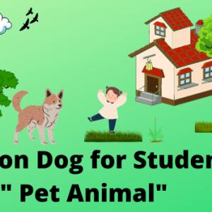 Essay on Dog in English