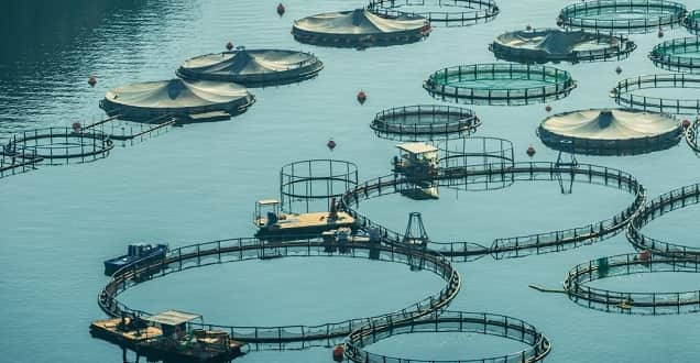 Aquaculture Course